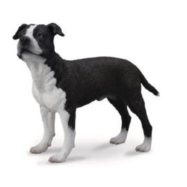 Amerikaanse staffordshire terrier 88610