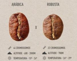 Over de koffieboon