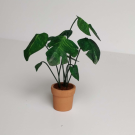 Large Monstera