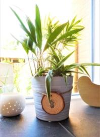 Boomschijfje met plant