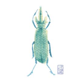 Kaart A7 | Bugs and beetles 2 | 5 stuks