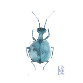 Kaart A7 | Bugs and beetles 5 | 5 stuks