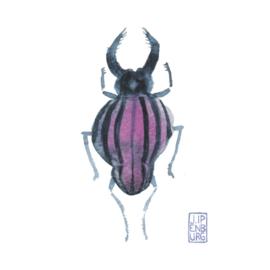Kaart A7 | Bugs and beetles 10 | 5 stuks