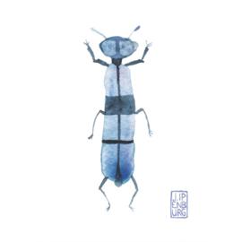 Kaart A7 | Bugs and beetles 6 | 5 stuks