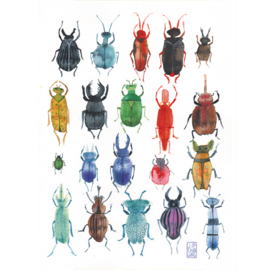 Poster A2 | Bugs and Beetles