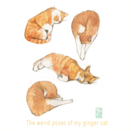 Kaart A5 | The weird Poses of my Ginger Cat | 2 stuks
