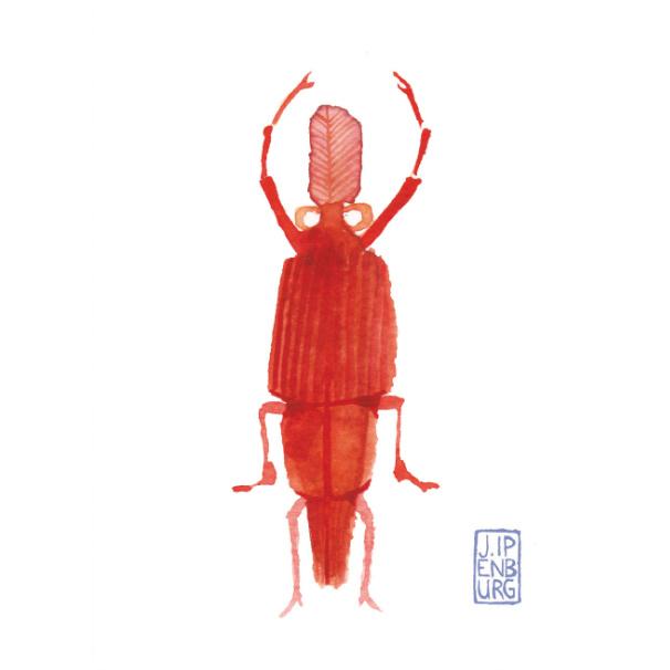 Kaart A7 | Bugs and beetles 3 | 5 stuks