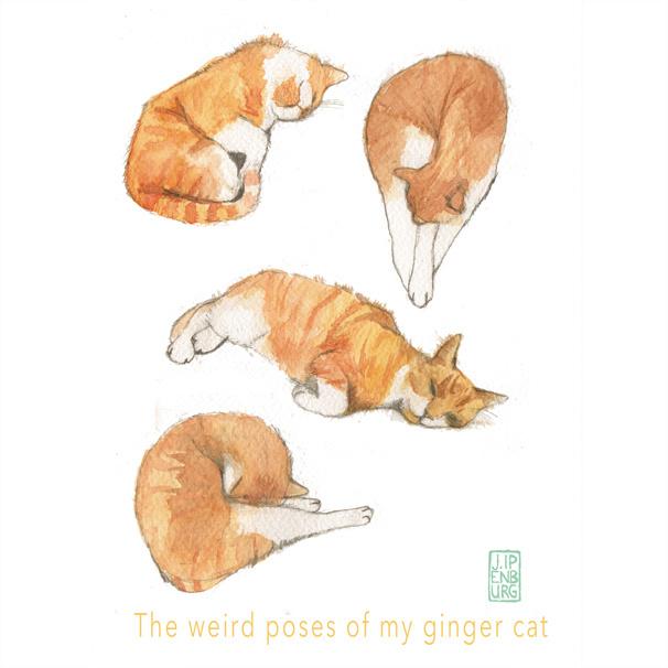 Kaart A5 | The weird Poses of my Ginger Cat | 5 stuks