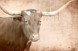 Mint by Michelle Decoupage - Texas Longhorn A1