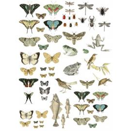 IOD Entomology etcetera