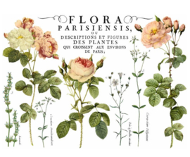 IOD Flora Parisiensis