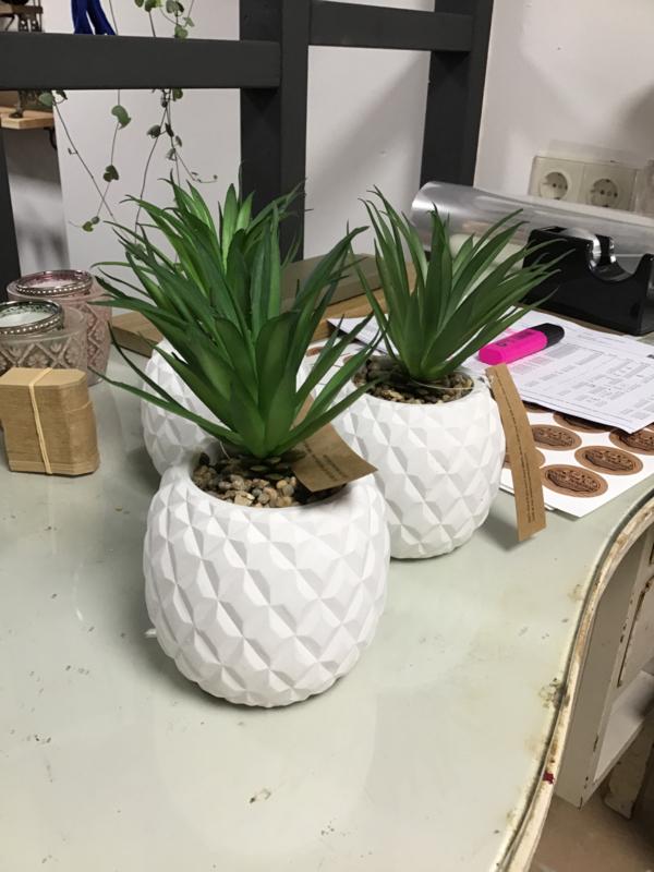 Ananas plantje