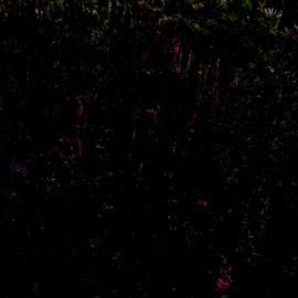 Kweekgebied • 7/11 (Wens aan de wand)