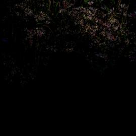 Kunstgebied •  11/11 (Wens aan de wand)