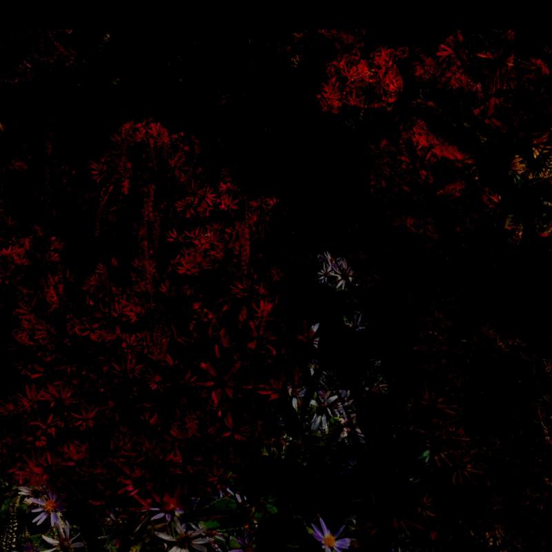 Tippelgebied •  10/11 (Wens aan de wand)