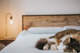 6 tips om beter te slapen