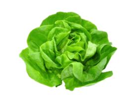 Salade (par pièce)