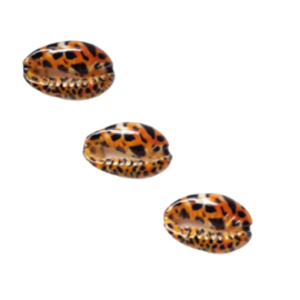 Kauri schelp met panter / luipaardprint